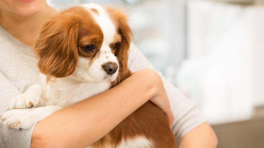 老犬に薬を飲ませるときの注意点