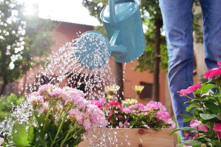 水やり 土が乾いたらたっぷりと水を与えよう