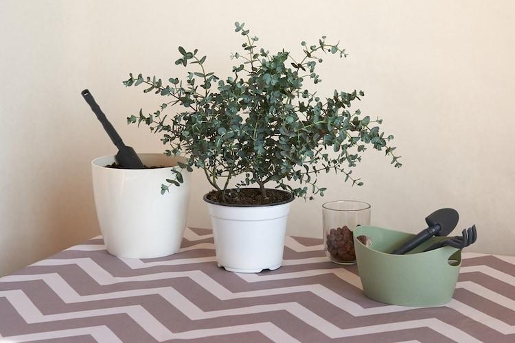 長い期間育てるには植え替えがおすすめ!