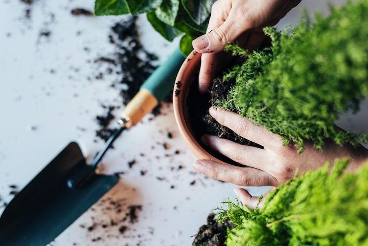 ・植え替え直後に肥料を与えるのはNG