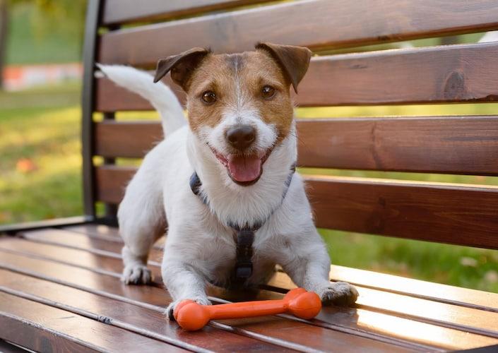 犬用ガムはいつから与える?