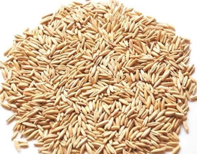▼燕麦(エンバク)