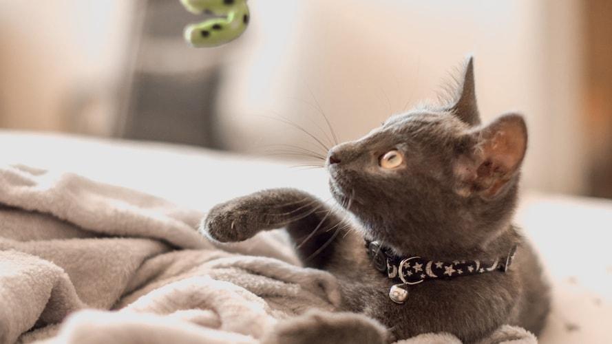猫が喜ぶ「猫じゃらし」の選び方