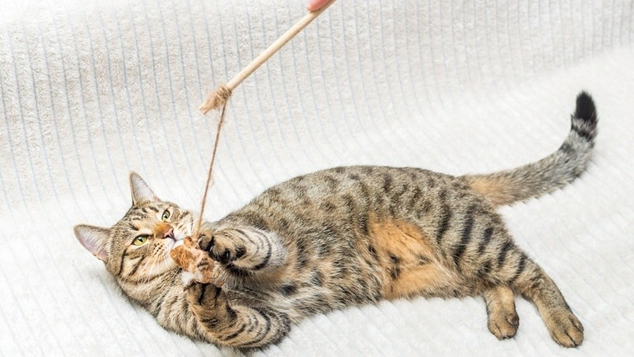 猫じゃらしは手作りできる?作り方を解説