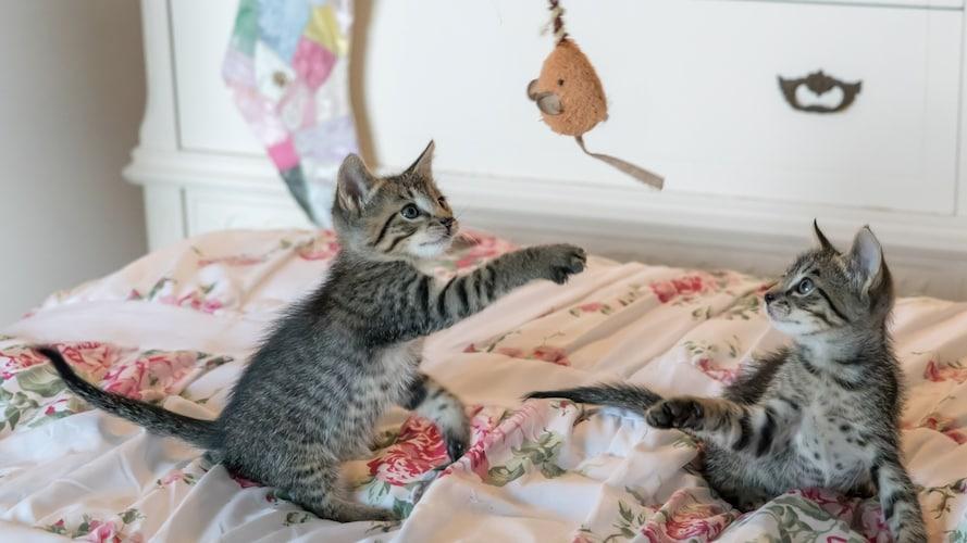 安全性の高い猫じゃらしを見分けるポイントは?