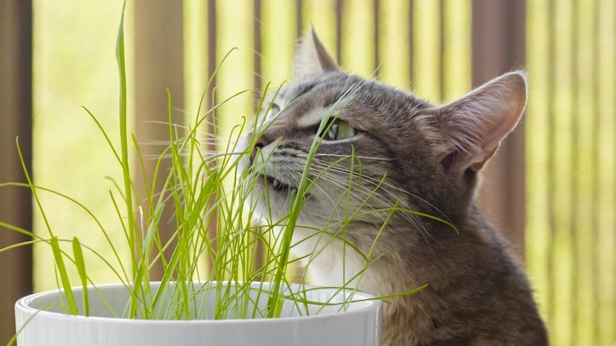猫草っていつからあげてもいい?