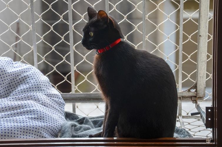 猫用フェンスの手作り方法を紹介~100均の材料でDIYも~
