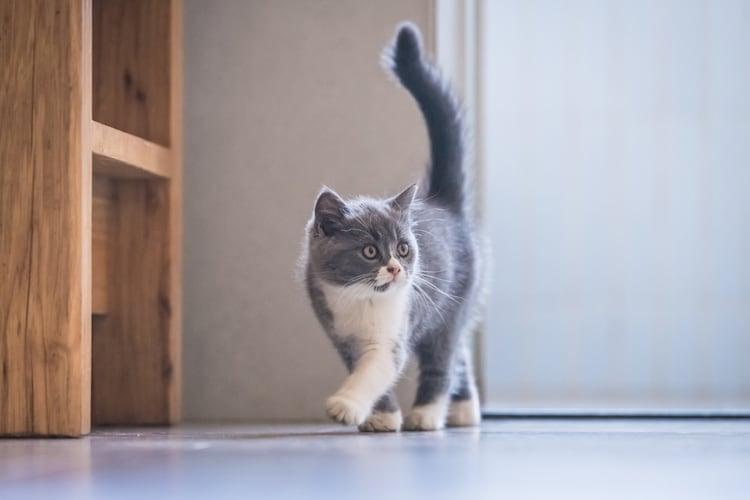 猫ドアの設置に合わせて室内環境を見直してみては?