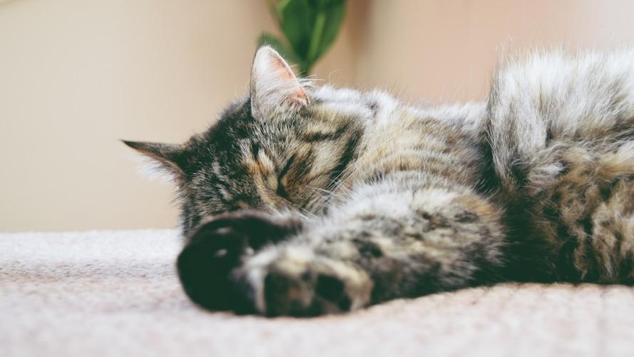 猫が安心できる快適な居場所づくりのため