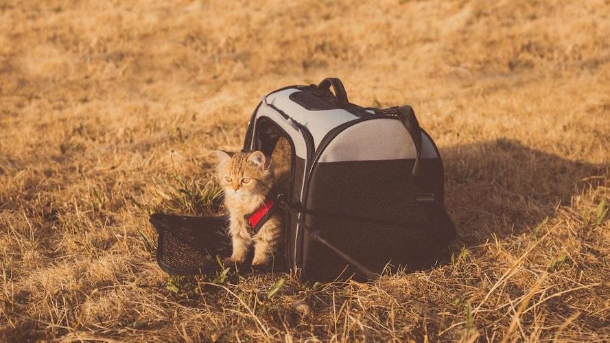 猫用キャリーバッグの選び方のポイント