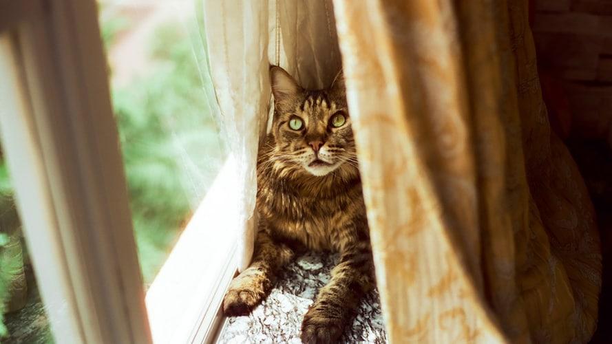 耐荷重|メインクーンなど大型猫には10kg以上がおすすめ