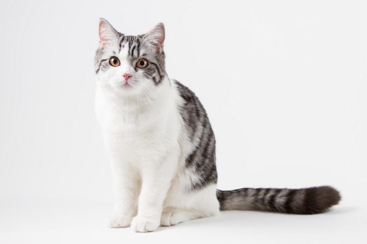 3.子猫用フードは避妊後、去勢後に卒業!