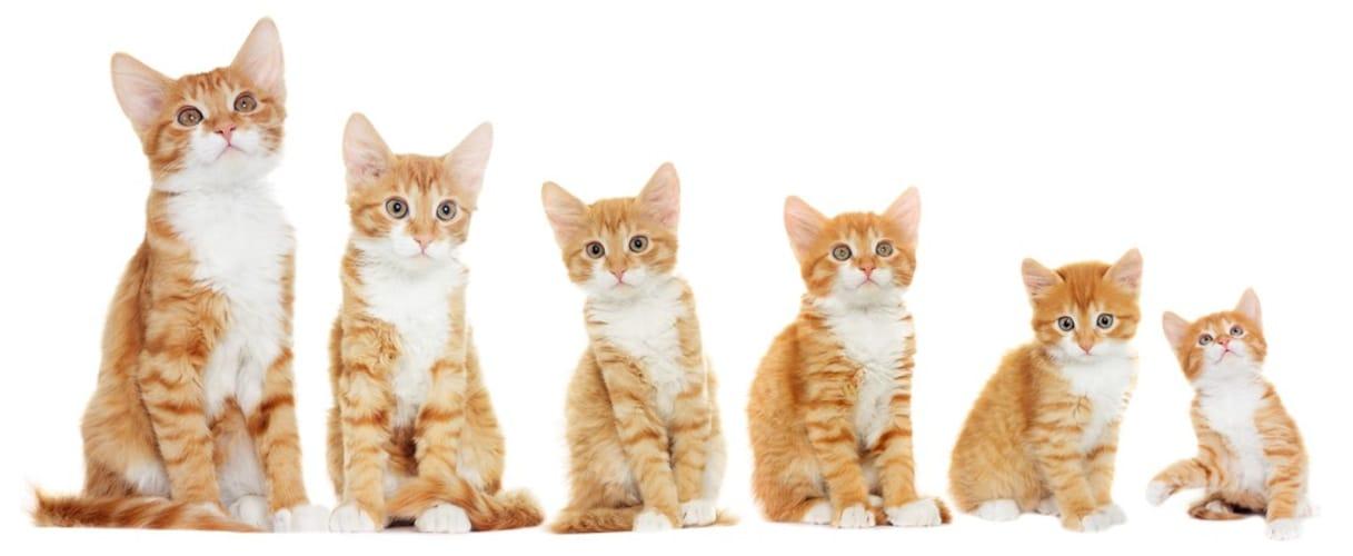 猫の年齢 子猫用・成猫用・高齢猫用をチェック!