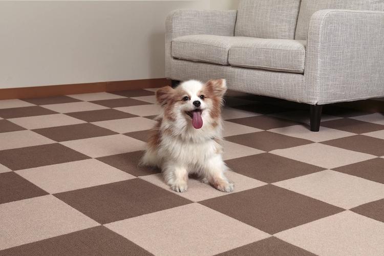 犬用滑り止めマットは必要?