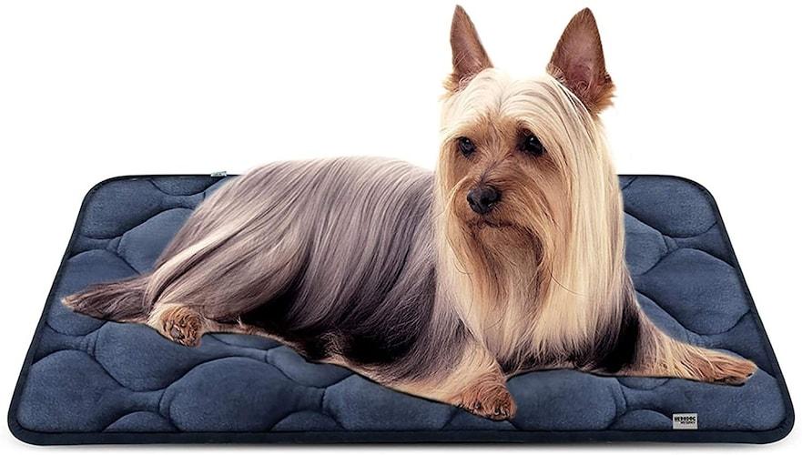 ●夏場・大型犬に最適な「マットレス/クッション型」