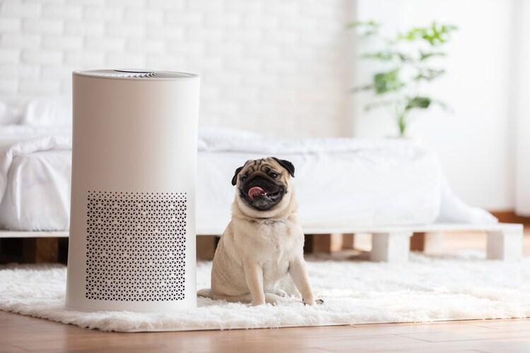 脱臭機と空気清浄機との違いは?