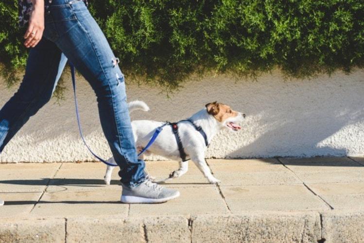 ▼普段使い|近所や散歩には脱ぎ履きしやすいものが◎