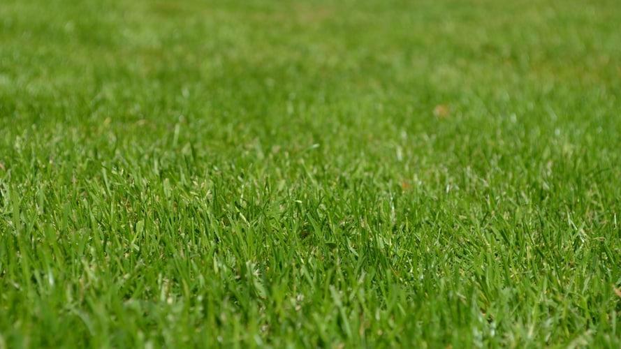 人工芝の選び方