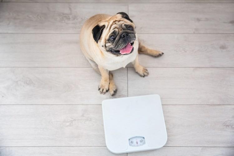 重量 20kg以下を目安に選ぶ