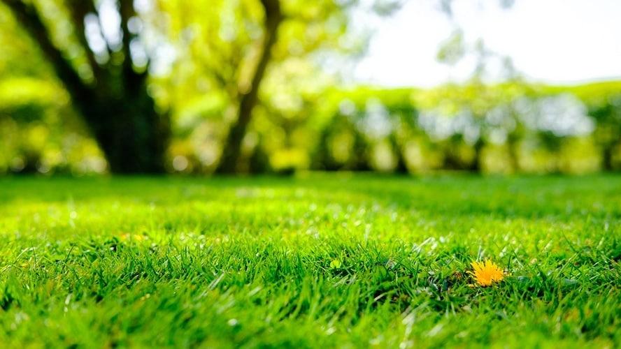 芝の密度|耐久性の良し悪しに影響