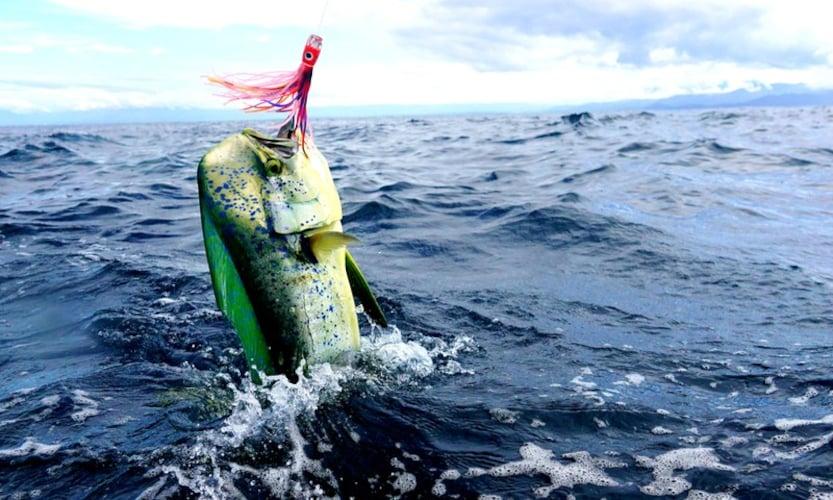対象魚|狙った魚が釣れるのかチェック