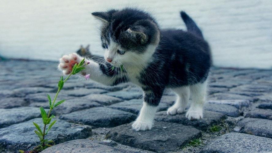 猫はなぜ猫じゃらしが好きなの?