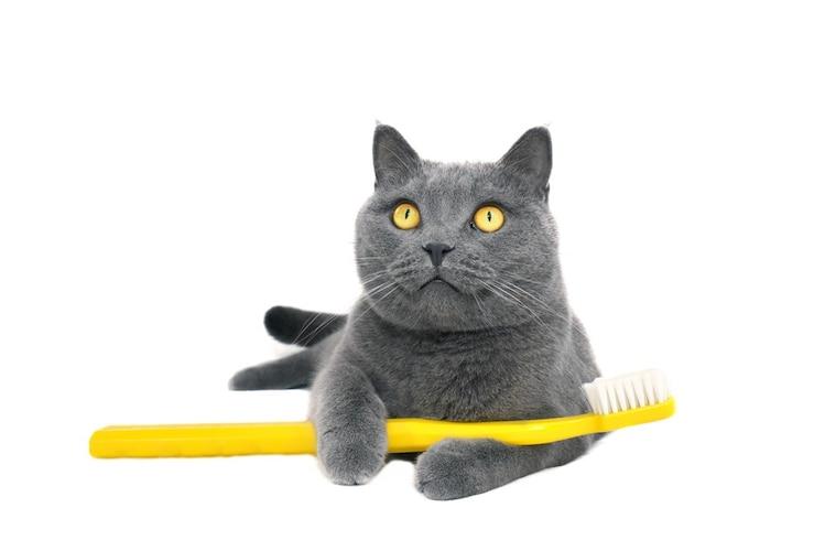 理想の歯磨き頻度は?