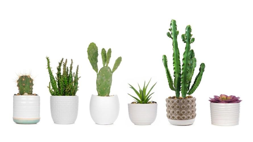 種類 代表的な柱型、団扇型、玉型の3種
