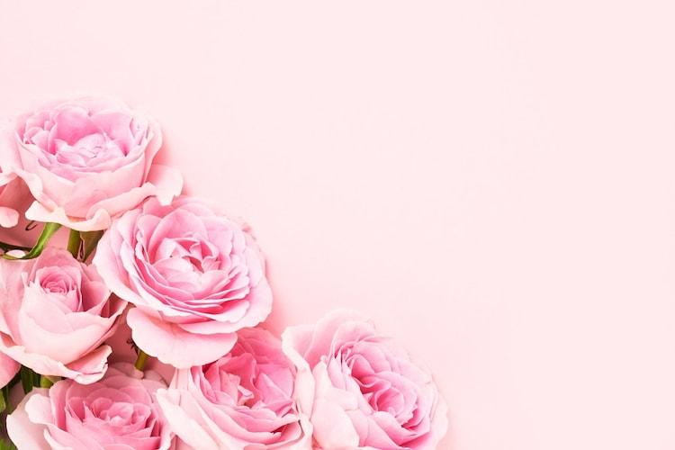 ▼大きめの花:存在感があり華やか!お祝い事のプレゼントに