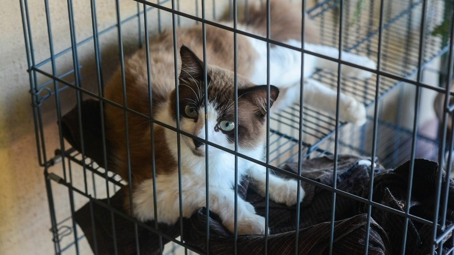 1)猫ケージへの慣れさせ方は?