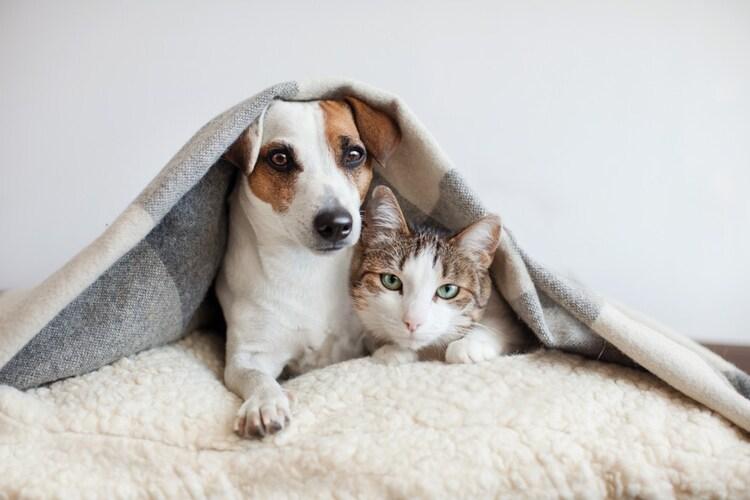 ペットを飼っている場合は『冷却剤』と『設置型』の使用を