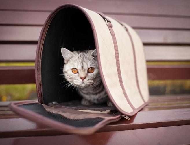 ▼トートバッグタイプはおしゃれでかわいいデザインが豊富!子猫にも◎