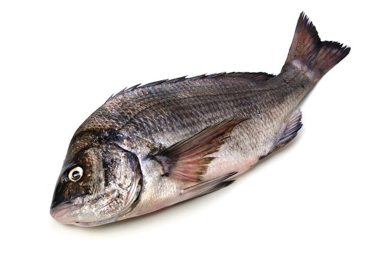 チヌ竿の特徴