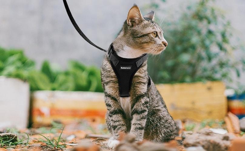 猫にハーネスは必要?