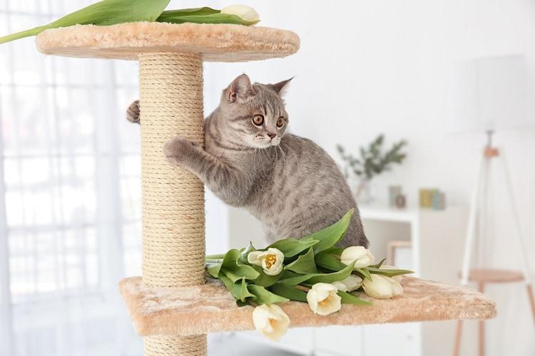 爪とぎ 猫ちゃんのストレス解消に便利!麻縄ポール付きが最適