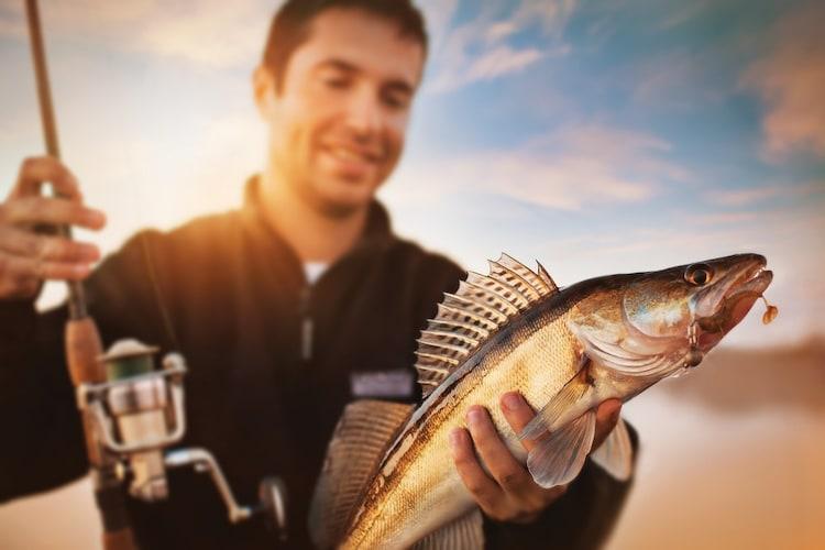 対象魚|餌によって釣れる魚が違う