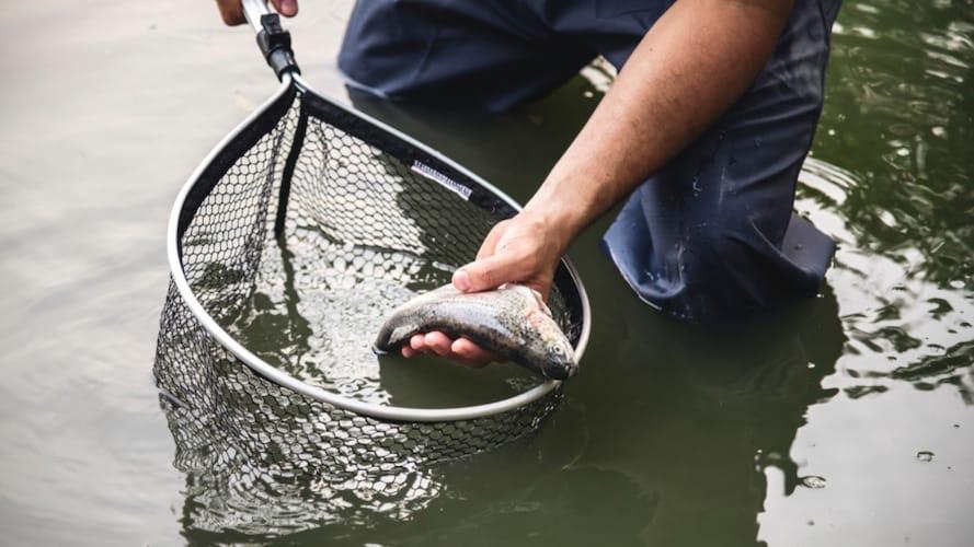 フレームサイズ|シーバスやアジなど魚種に合わせて選ぶ