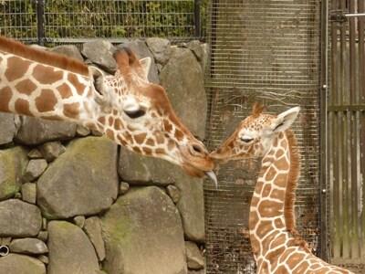 ウララ「ママ~、大好き」。ママ「おお、よしよし、いい子いい子」