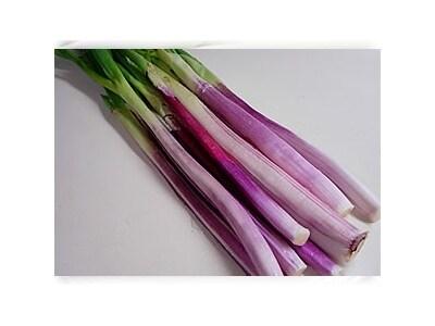 旬の野菜のシンプル料理レッドポアロ