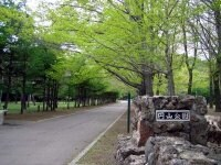 円山公園。
