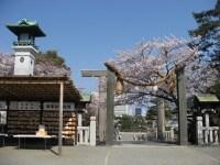 春の伊勢山皇大神宮はサクラがたくさん咲いています