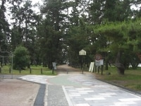 天橋立(2)/松林