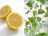 ハーブやレモンを料理に活用するシーンが増えそう