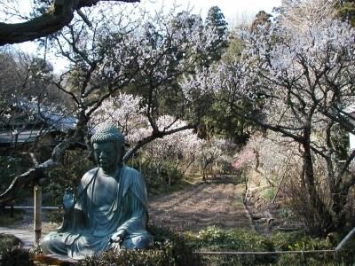 東慶寺の梅