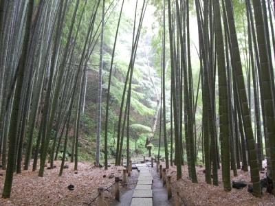 報国寺(竹寺)の竹の庭