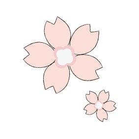 【カラー】桜の可愛く上品な花です。