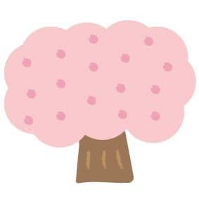 【カラー】満開の桜の木です。