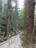 那智の滝・飛瀧神社(3)/滝へ向かう参道