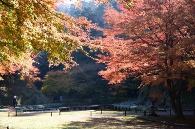 明月院undefined本堂後庭園(2015年12月9日撮影)