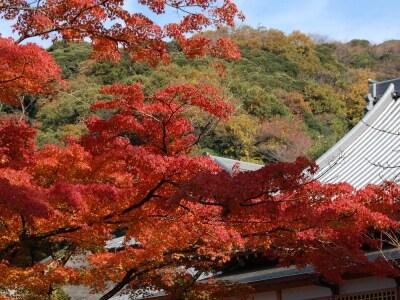 円覚寺境内の瓦屋根の建物と紅葉(2007年12月1日撮影)